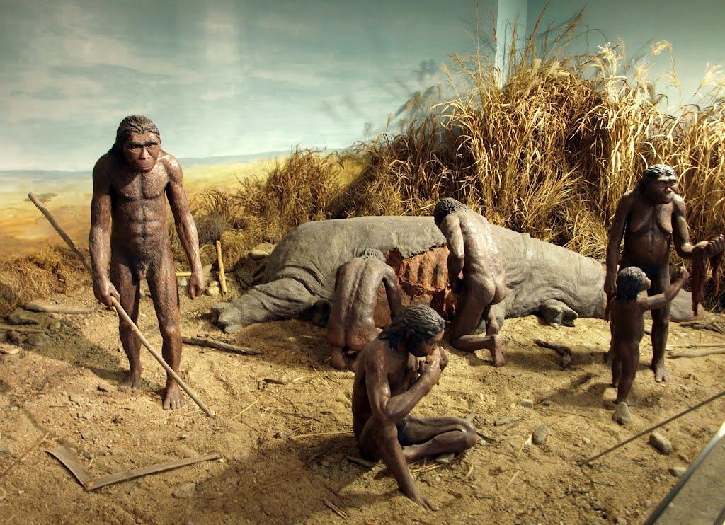 La comparsa dell uomo nella rift valley e l inizio della for Planimetrie della caverna dell uomo