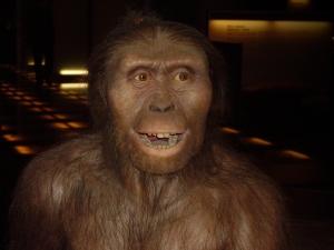 Lucy, esemplare di austrolopiteco, apparso circa 4 milioni di anni fa