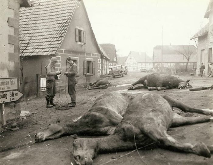horrors-of-war-troops-string-wire-past-4-dead-horses-which-were-killed-along-with-5-german-soldiers.jpg